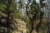 DSC03298b (Braulio Gómez) Tags: barrancadehuentitã¡n biodiversidad caminoamascuala canyon canyonhuentitan faunayflora floresyplantas guadalajara jalisco mountainrange naturaleza sierra senderismo paisaje barrancadehuentitán barranca huentitán ixtlahuacandelrío méxico guardianesdelabarranca