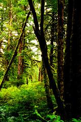 B1BBEST VAN DOZER WOODS-03804 (Gerry Slabaugh) Tags: oregon coast gerryslabaugh green van dozer woods trees mossy