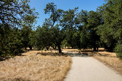 Hot and Dry on the Loop trail (randyherring) Tags: ca california summer almaden flora plants nature dryseason sanjose siliconvalley park afternoon recreational outdoor guadalupeoakgrovepark unitedstates us