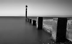 Still waters (RIS'n'RAS) Tags: groyne blackandwhite monochrome long exposure longexposure sea beach seagull post water ocean seascape