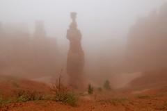 IMG_2856 (Geology Joel) Tags: fog hoodoos brycecanyon bryceamphitheater geology rocks nature nationalparks utah desert weather unique hike trails rain