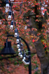Illumination (James_D_Images) Tags: bellingham washingtonstate string lights bulbs streetlamp wire tree autumn fall leaves foliage trunk red green
