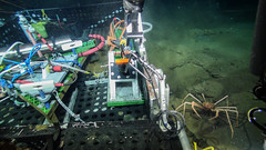 Spider crab next to tool basket (Ocean Networks Canada) Tags: endeavour spidercrab toolbox wiringtheabyss2016 crab abyss16