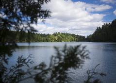 here dwells cthulhu (Trevor Pritchard) Tags: pinklake gatineau park meromictic lake canada september 2016 quebec water
