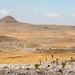 Bale landscape with Lobelia plants