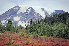 Mount Rainier at Paradise (heatherweins) Tags: mtrainiernationalpark mtrainier paradise mountrainiernationalpark mountains hiking