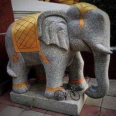 เห็น #ช้าง ปั่น อย่าปั่นตามช้าง คำพังเพยเขาว่าอย่างนี้หรือเปล่านะ?