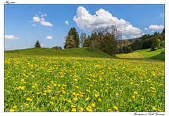 Springtime in South Germany (tom22_allgaeu) Tags: flower nature germany bayern deutschland bavaria nikon natur wiese grassland tamron springtime frhling allgu allgaeu d3200 eistobel westallgu maierhfen