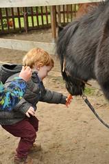 20160418 pony rijden leefgroep1 SP_00063 (leefschool) Tags: pony rijden leefgroep1 20160418