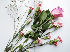Still pressed flowers (chloejadeyoung) Tags: pink flowers white green art nature beautiful leaves photography spring stem pretty flat natural bright pages earth decoration experiment environment inside pure pressed