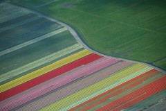 Tulips and meadows (Netherlands) (Frans.Sellies) Tags: netherlands landscape tulips aerial tulip img5843