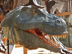 Friendly T Rex Model (mikecogh) Tags: model dinosaur head teeth scales oxford trex tyrannosaurusrex pittriversmuseum