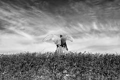 Sfartsmonumentet (virtualwayfarer) Tags: art monument statue angel copenhagen denmark exploring streetphotography dramatic lifestyle explore danish nordic dslr scandinavia danmark scandinavian kobenhavn copenhagenharbor wingedlady canon6d sfartsmonumentet sofarts