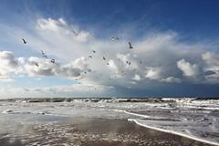 2012_IMG_3424 (niek haak) Tags: beach strand gulls zeeland meeuwen
