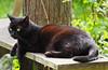 Kocio (arjuna_zbycho) Tags: pet cats pets cute animal animals cat blackcat kitten feline chat felix kitty kittens tuxedo gato tuxedocat gatto katzen haustier kater tier gattini hauskatze kocio