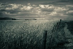 Wheatfields (Dreamcatcher photos) Tags: blackandwhite cloud field fence path wheat soe cloudscape dreamcatcherphotos ppf756