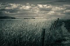 Wheatfields (Dreamcatcher photos) Tags: blackandwhite cloud field fence path wheat soe cloudscape dreamcatcherphotos