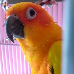 Sunny Chirp (Lilo Cateyes) Tags: bird animals