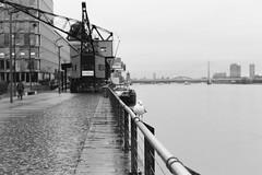 Eine Mwe (schwarzgrauweiss) Tags: hp5 hafen mwe rhein ilford vogel gelnder rheinauhafen lastkran