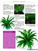 Комнатные и садовые растения от А до Я 2014 28