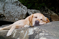 Winston on the rocks Richland Creek (Paul2660-1) Tags: labradors labs labradorphotography