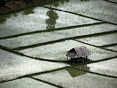 Shelter (an vanhooren) Tags: fertile peace ricefield shelter nourishment asia