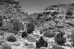 The Gully (Kool Cats Photography over 7 Million Views) Tags: tamron16300mmf3563diiivcpzdb016 canoneost3i gully gulch dry desert lanscape utah blackandwhite monochrome photography landscapephotography rocks ravine wash
