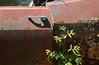 reclaiming cedar habitat (mcfcrandall) Tags: old ontario cars abandoned rust peeling paint cedar rusted newgrowth cedartree mcleans mcleansautowreckers