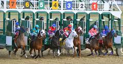 2015-01-02 (99) r6 and they're off (JLeeFleenor) Tags: photos photography md marylandracing marylandhorseracing laurelpark jockey   jinete  dokej jocheu  jquei okej kilparatsastaja rennreiter fantino    jokey ngi horses thoroughbreds equine equestrian cheval cavalo cavallo cavall caballo pferd paard perd hevonen hest hestur cal kon konj beygir capall ceffyl cuddy yarraman faras alogo soos kuda uma pfeerd koin    hst     ko  gate maryland