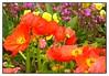Le Havre City Garden (Audrey A Jackson) Tags: city colour garden 1001nights lehavre panasonicdmctz3