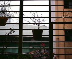 GF670-NO.1 (kennycorn) Tags: camera film photo fuji superia taiwan snap ishootfilm 120film fujifilm taipei filmcamera 台灣 台北 superia100 fujinon 120mm ebc shotonfilm 80mm fujicolor filmphotography 中片幅 負片 filmisnotdead keepfilmalive filmshooter filmforever filmwins 台北影像 filmshooters fujifilmgf670 gf670professional gf670 fujifilmgf670professional