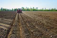 Forming ridges and sowing potatoes (RuudMorijn-NL) Tags: plant tractor dusty industry field lines modern rural work outdoors spring potatoes pattern technology farm labor farming machine seed natuur ground system equipment machinery soil dirt rows clay land farmer agriculture hank lente klei tool sow cultivation agricultural tanks landschap tegenlicht noordbrabant lijnen occupation cultivating voorjaar sowing cultivate aardappelen voertuig landelijk stoffig seeder landbouwwerktuig akkerbouw aanaarden ruggen gewas pootaardappelen pootmachine agricultuur machinaal oranjepolder aardappelteelt loonwerk volautomatisch gekoppelde grondbewerking aardappelruggen convergerende gemeentewerkendam 4rijigecombipootmachine gebrvanmeel grimmeexacta