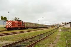 CP 1408 com Corail e Sorefames Renovadas IC - Beja (valeriodossantos) Tags: portugal train cp beja especial comboio furgo 1400 corail passageiros caminhosdeferro ovibeja carruagens linhadoalentejo locomotivadiesel cpregional sorefamesrenovadasic furgogerador comboiodaovibeja