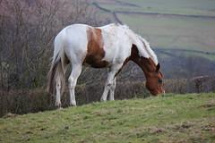 Calver 052 (Slimboy Fat) Tags: derwentvalley calver derbyshire england uk