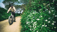 IMG_2015-1a (Photopedaler) Tags: rural wildflowers hedges verges countrylanes bicycleriding cornishcycling