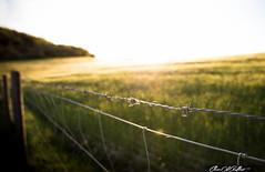 Warm (Clear Of Conflict) Tags: sunset naturaleza sun sunlight lake seascape reflection tree sol nature water de landscape lago atardecer agua sundown dusk pantano alava gamboa reflejos trigo ullibarri nanclares