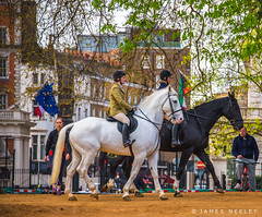 Morning Ride (James Neeley) Tags: horses london hydepark jamesneeley