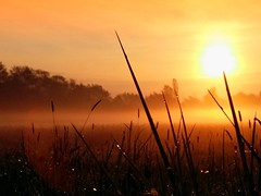 Good morning (Tobi_2008) Tags: sky sun nature grass fog sunrise germany landscape deutschland soleil nebel saxony natur himmel ciel sachsen gras landschaft sonne sonnenaufgang allemagne germania platinumheartaward