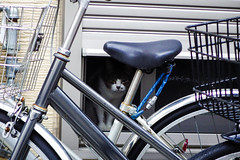 Today's Cat@2016-05-27 (masatsu) Tags: cat pentax catspotting mx1 thebiggestgroupwithonlycats