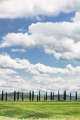Cipreses (Antonio H) Tags: sky landscape arboles exterior outdoor paisaje cielo nubes cypresses cipres makroplanar1002ze