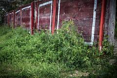 Ancient folklore (The eclectic Oneironaut) Tags: plaza old espaa grass canon de eos spain toros salamanca bullfighting 6d corridas 2016 castillayleon unuse