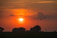 Birds at Sunrise (Infomastern) Tags: morning sky cloud bird sunrise landscape countryside soluppgng landskap fgel geolocation sdersltt landsbygd geocity camera:make=canon exif:make=canon geocountry geostate exif:lens=efs18200mmf3556is exif:focallength=145mm exif:aperture=71 exif:isospeed=100 camera:model=canoneos760d exif:model=canoneos760d