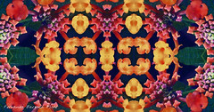 mandala floral (ojoadicto) Tags: mandala digitalmanipulation flower flor nature naturaleza intervenciondigital artisticphotography