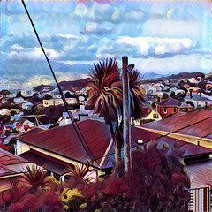 Cabbage Tree (feefoxfotos) Tags: wellington processedimage view houses cabbagetree