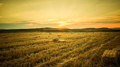 Golden Nuggets.. (Ext-Or) Tags: light sunset sky sun nature yellow clouds turkey landscape nikon flickr shine outdoor earth hills fields redsky bales sunrays straws eurasia goldennuggets flickrturkey nikonturkey nikond5200