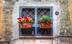 Rome window (Michael Leek Photography) Tags: architecture window flower texture building rome italy roma europe michaelleek michaelleekphotography hdr highdynamicrange travel travel2016 culture style fashion buildings decoration streetphotography europa
