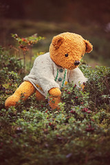 The wondering Serafina and the lingonberries. (Maria Karesto) Tags: teddybear teddy wonderer explorer lingonberry lingonberries berry berries autumn nature