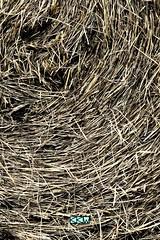 Hay Bale (Craig Walkowicz) Tags: hay haybale straw grass fodder swirl whirl twirl ccw