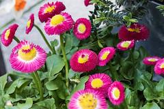 flower-9888