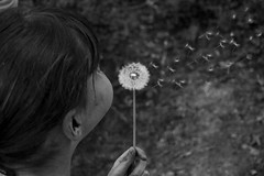 Dandelion (marc_morris1982) Tags: uk blackandwhite bw white black flower girl canon woodland kent weed woods wind walk sigma canterbury blow fluff dandelion bnw 1850 sigma1850mm sigma1850 1850mm 600d sigmadc canon600 canonuk canon600d